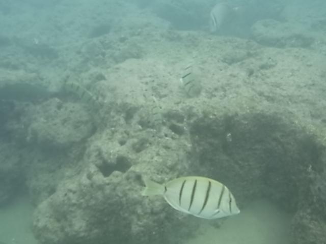 ハナウマ湾水中2
